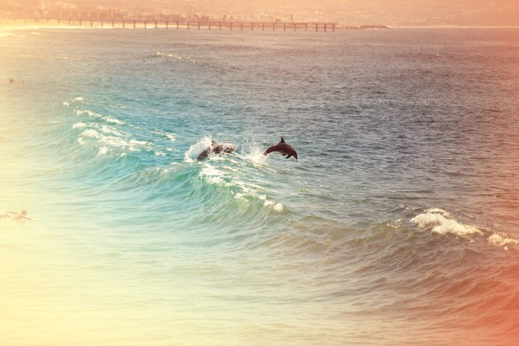 Dolphins 587x391 Manhattan Beach