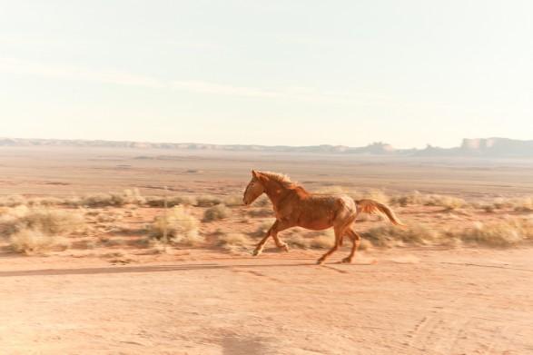 MG 1357 587x391 Navajo Horse