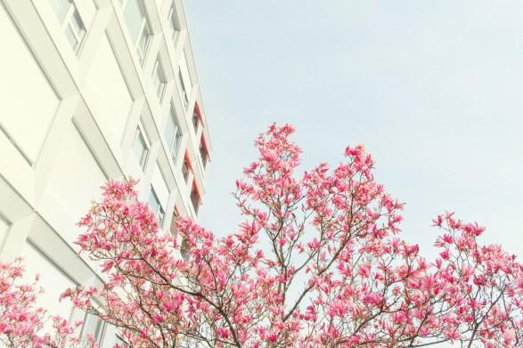 Springtime 587x391 Springtime