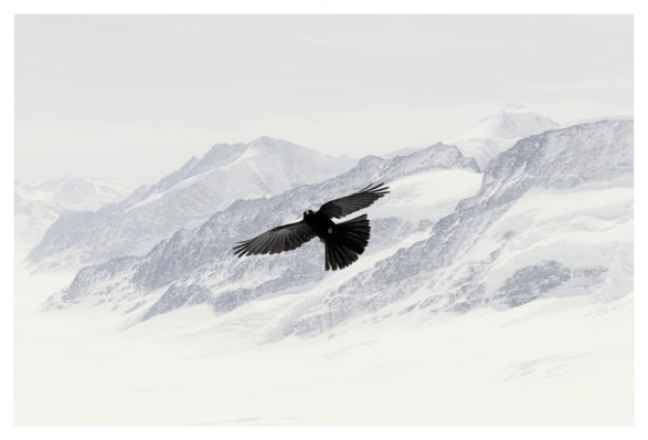 blackcrows11 587x398 UK Association of Photographers WINS