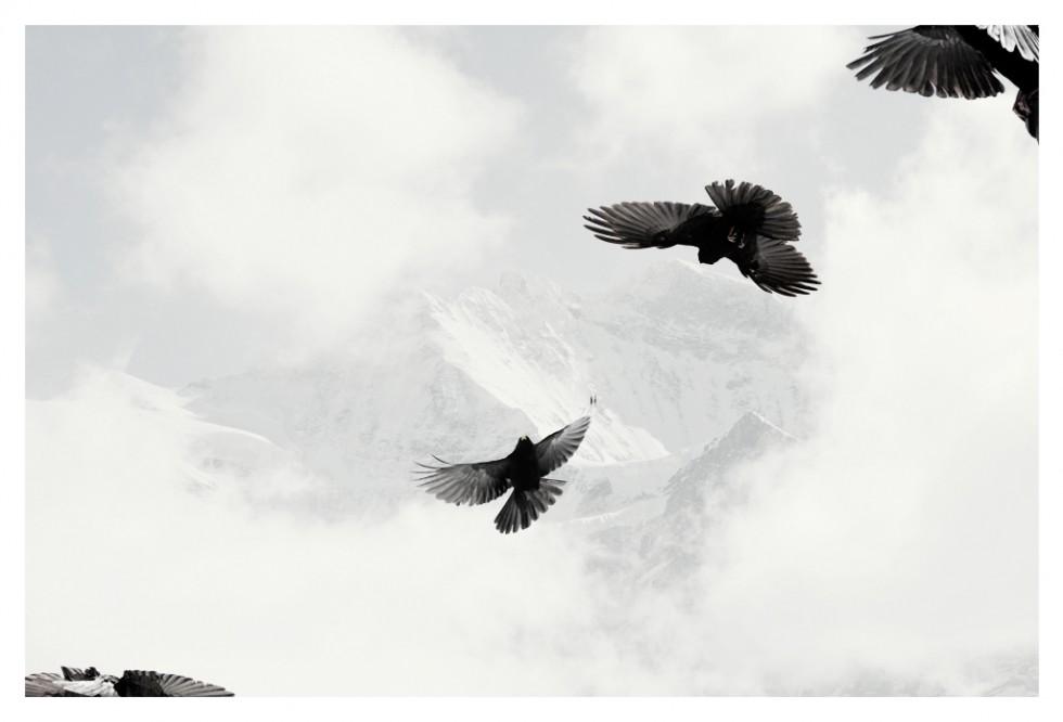 blackcrows3