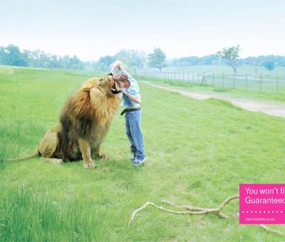 T-Mobile - Lion